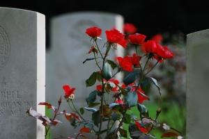 cemetery-roses-1349445-640x428