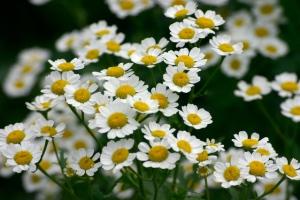 field-flower-1-1551147-639x426